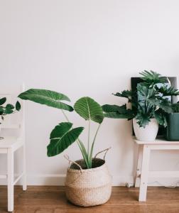 The benefits of indoor plants