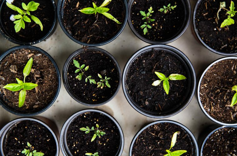 How to prep your garden for spring