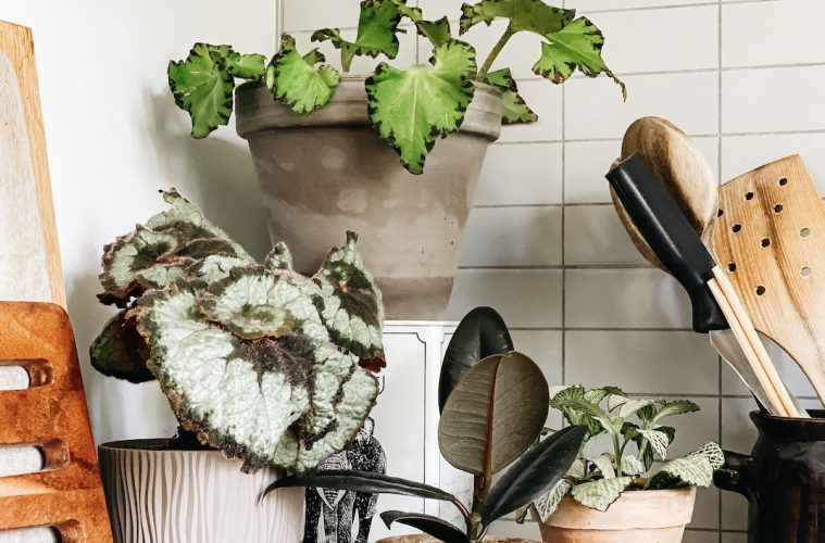 Care tips for houseplants