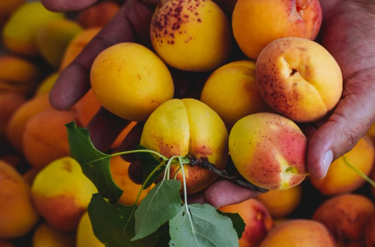 How to grow apricots at home