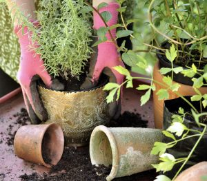 Potting Tips: How to pot like the pros